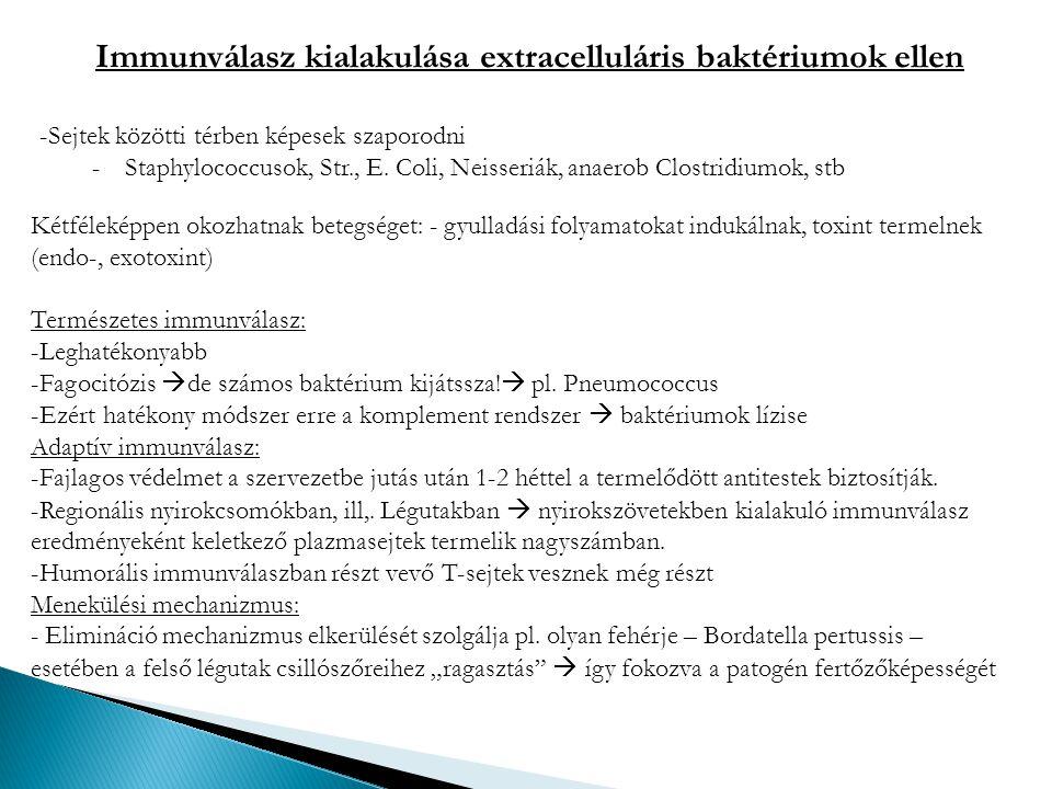 Immunválasz kialakulása extracelluláris baktériumok ellen