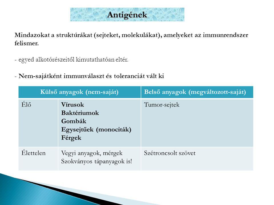 Antigének Mindazokat a struktúrákat (sejteket, molekulákat), amelyeket az immunrendszer felismer. egyed alkotórészeitől kimutathatóan eltér.