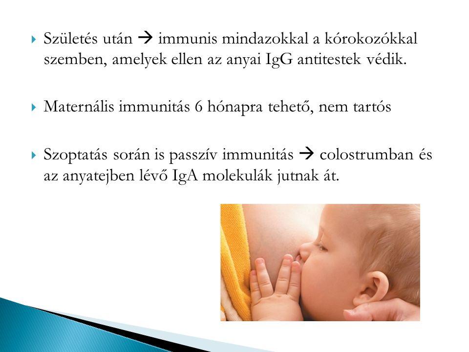 Születés után  immunis mindazokkal a kórokozókkal szemben, amelyek ellen az anyai IgG antitestek védik.