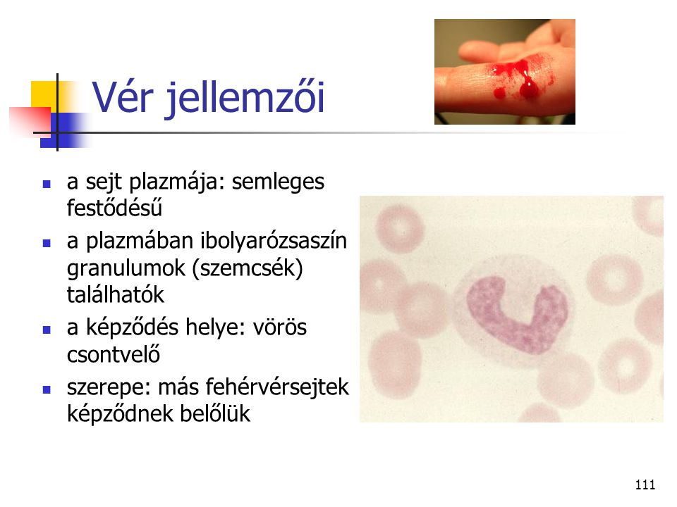Vér jellemzői a sejt plazmája: semleges festődésű