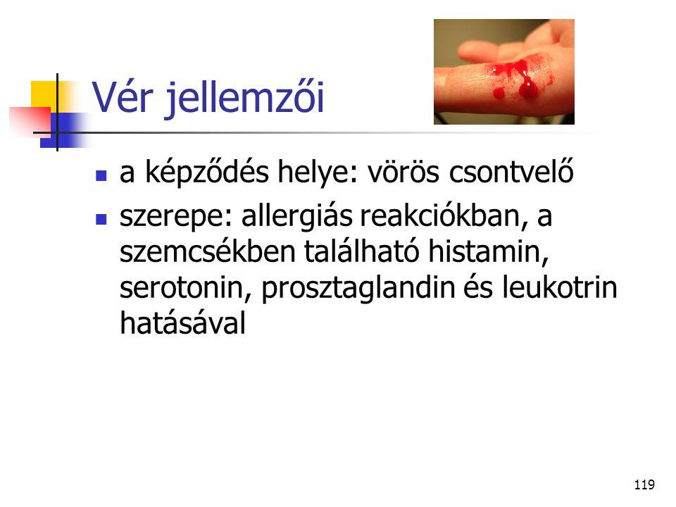 Vér jellemzői a képződés helye: vörös csontvelő