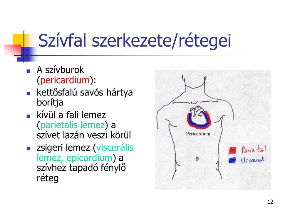 Szívfal szerkezete/rétegei