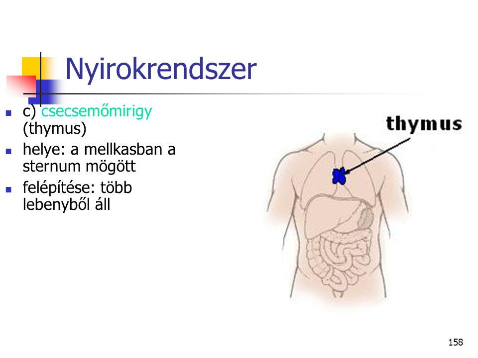 Nyirokrendszer c) csecsemőmirigy (thymus)