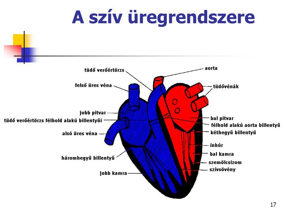 A szív üregrendszere 17