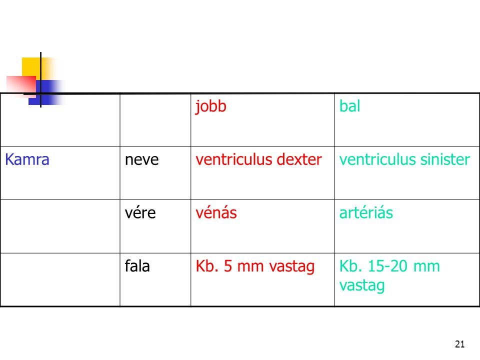 jobb bal Kamra neve ventriculus dexter ventriculus sinister vére vénás
