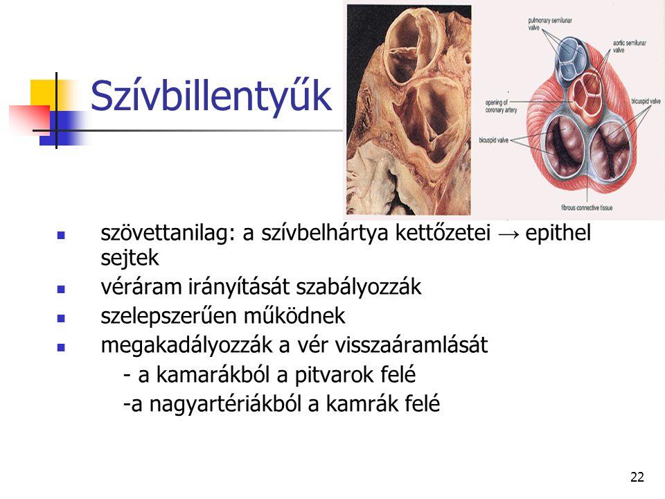 Szívbillentyűk szövettanilag: a szívbelhártya kettőzetei → epithel sejtek. véráram irányítását szabályozzák.