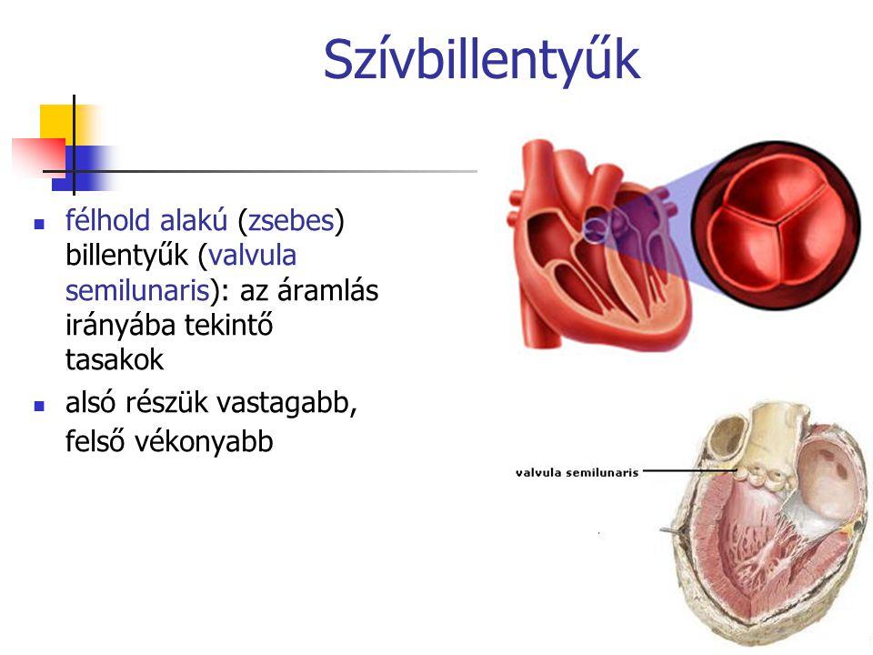 Szívbillentyűk félhold alakú (zsebes) billentyűk (valvula semilunaris): az áramlás irányába tekintő tasakok.