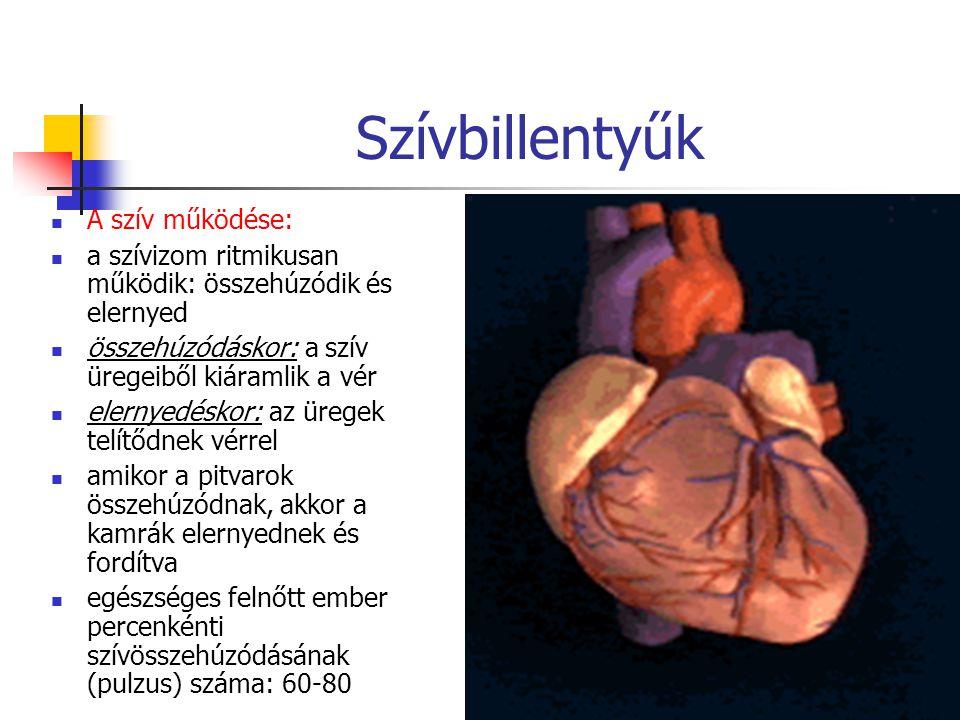 Szívbillentyűk A szív működése: