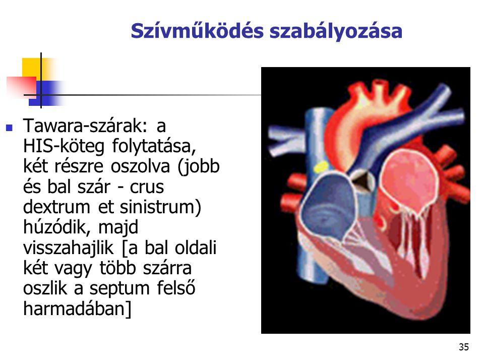 Szívműködés szabályozása