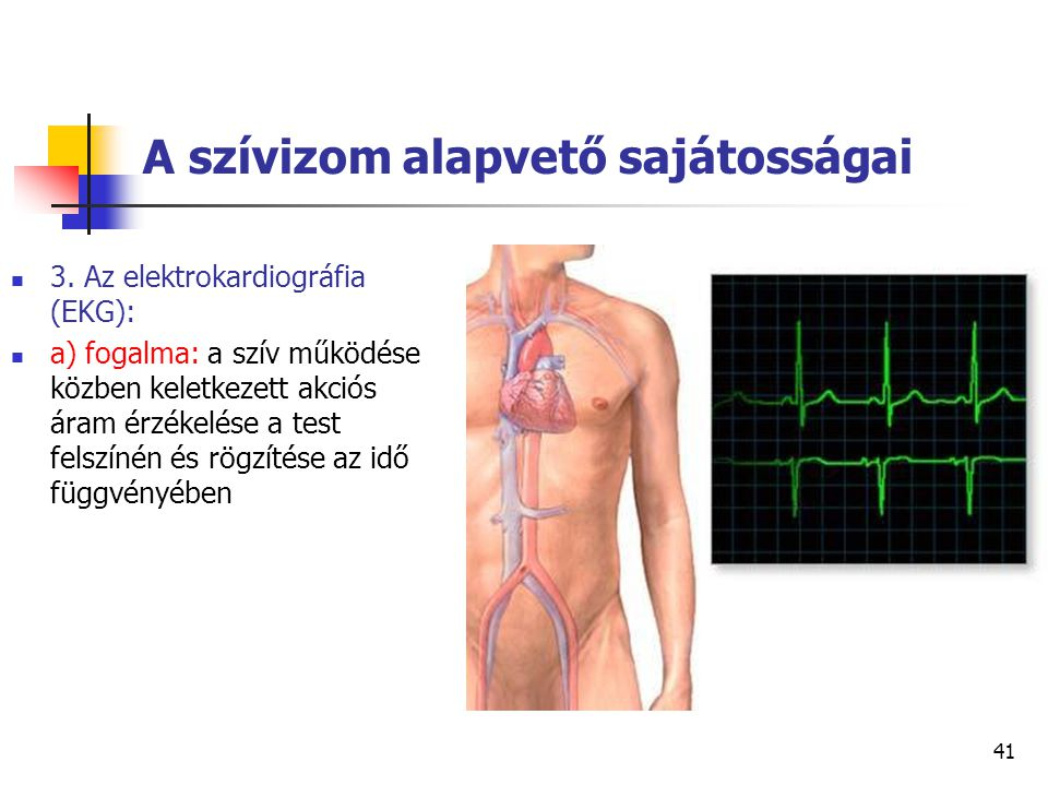 A szívizom alapvető sajátosságai