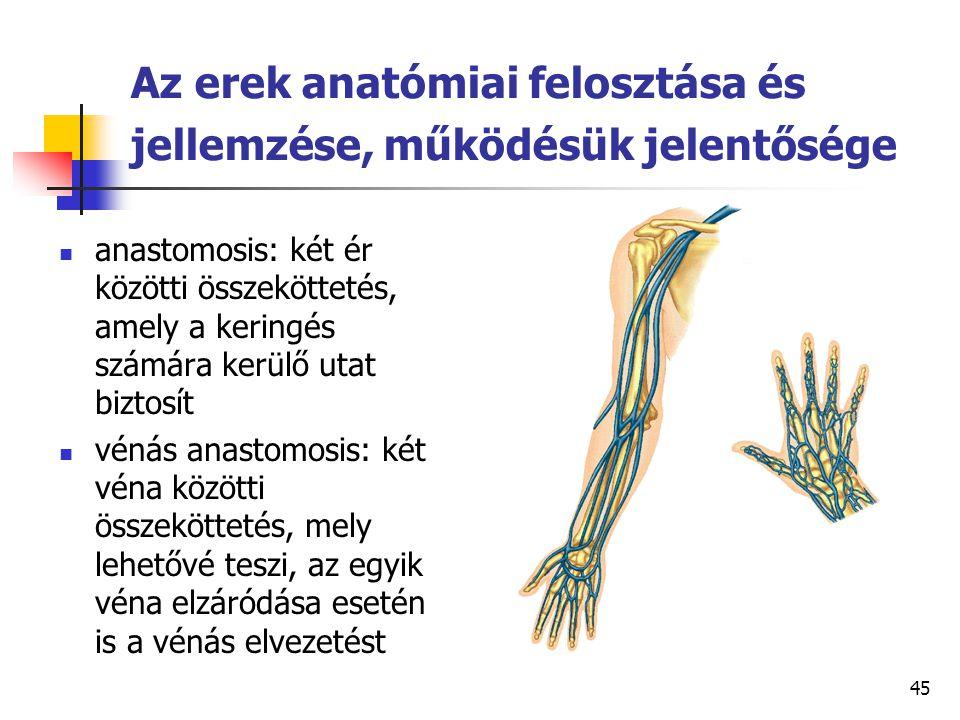 Az erek anatómiai felosztása és jellemzése, működésük jelentősége