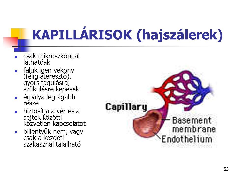 KAPILLÁRISOK (hajszálerek)