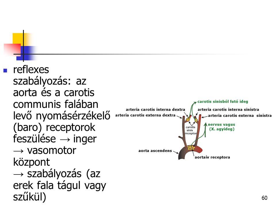 reflexes szabályozás: az aorta és a carotis communis falában levő nyomásérzékelő (baro) receptorok feszülése → inger → vasomotor központ → szabályozás (az erek fala tágul vagy szűkül)