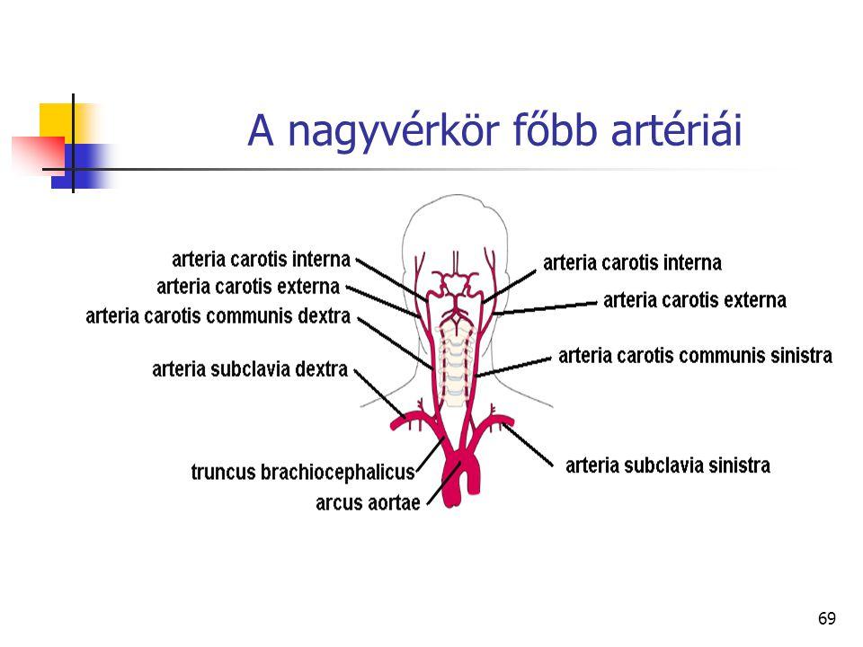 A nagyvérkör főbb artériái