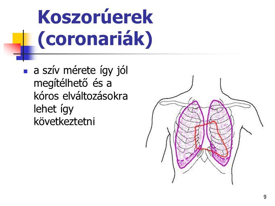 Koszorúerek (coronariák)