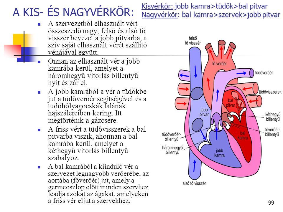 Kisvérkör: jobb kamra>tüdők>bal pitvar