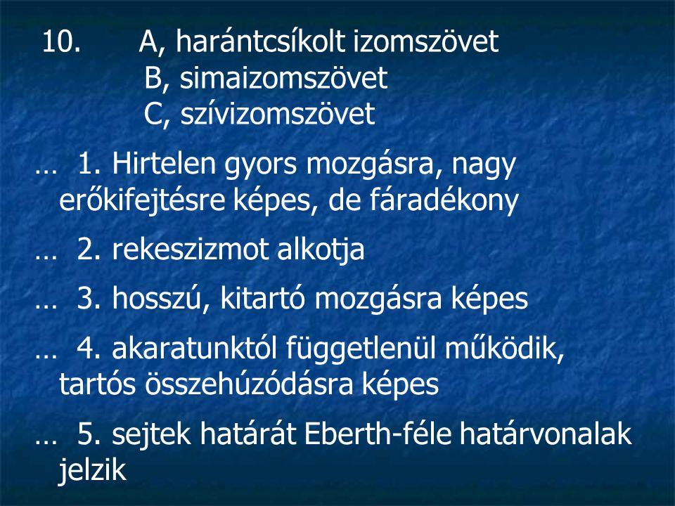 10. A, harántcsíkolt izomszövet B, simaizomszövet C, szívizomszövet