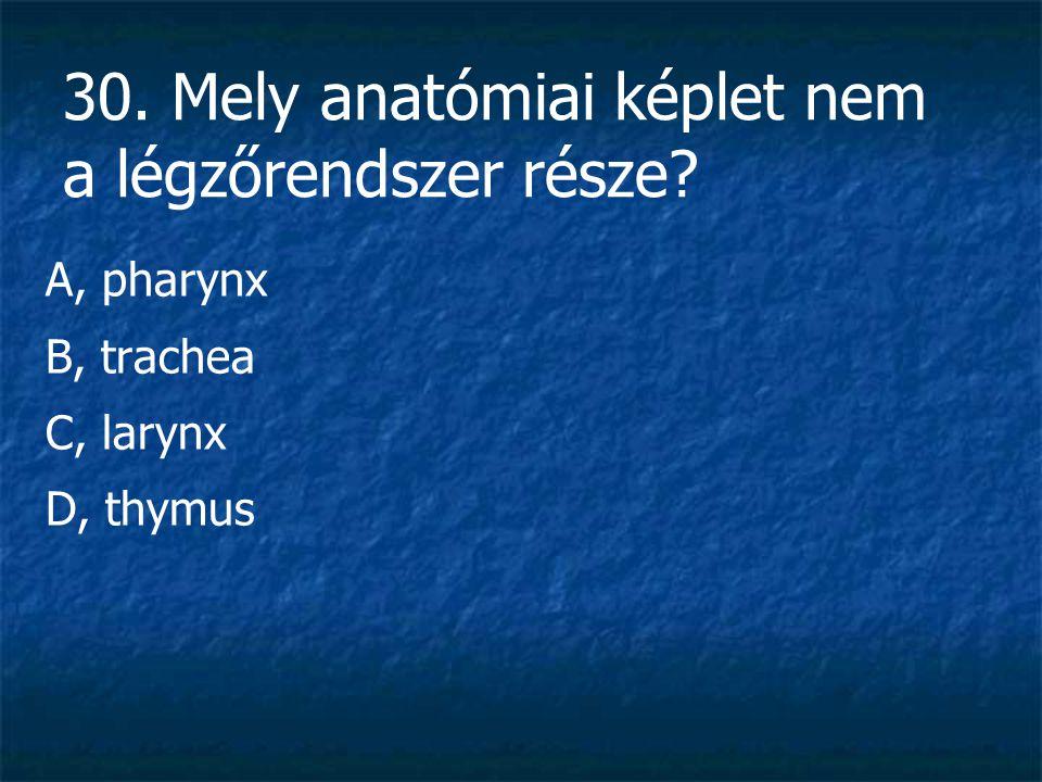 30. Mely anatómiai képlet nem a légzőrendszer része