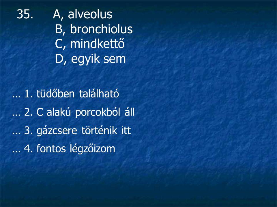 35. A, alveolus B, bronchiolus C, mindkettő D, egyik sem