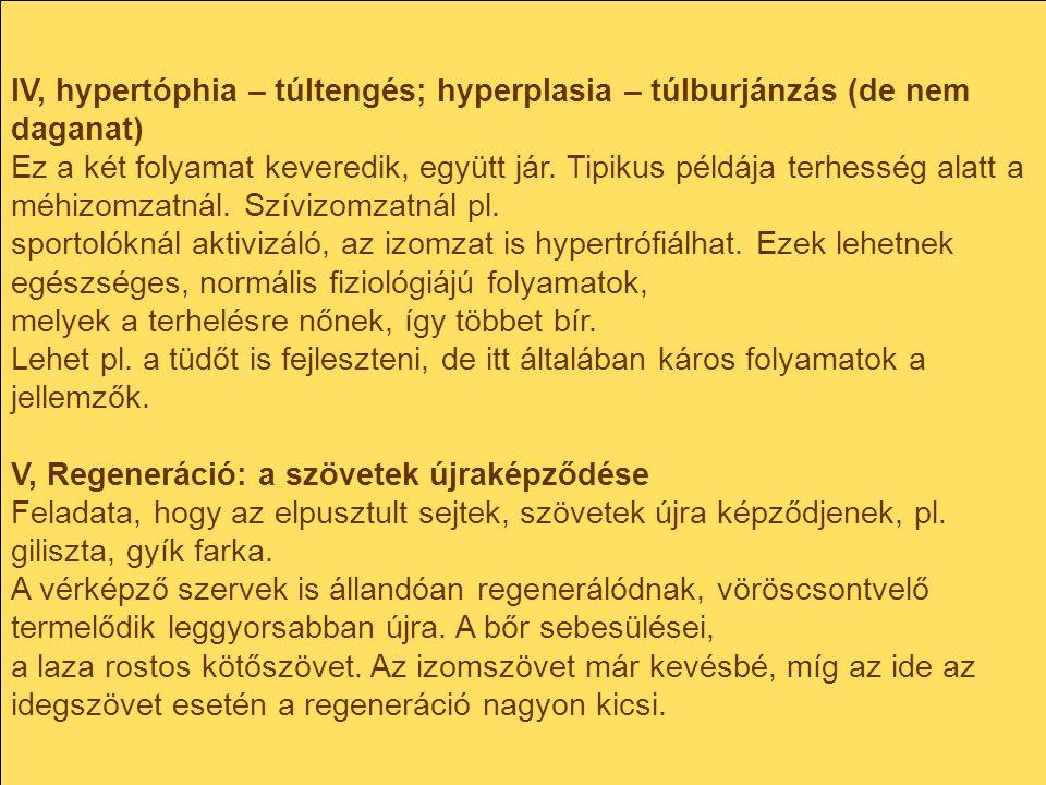 IV, hypertóphia – túltengés; hyperplasia – túlburjánzás (de nem daganat)