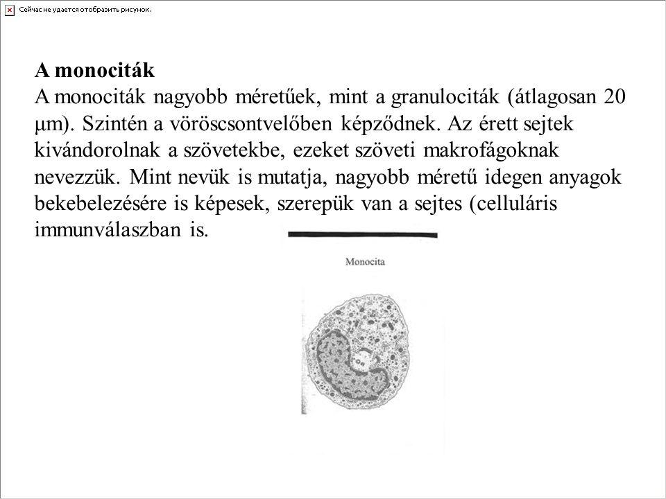 A monociták