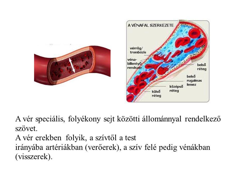 A vér speciális, folyékony sejt közötti állománnyal rendelkező szövet.