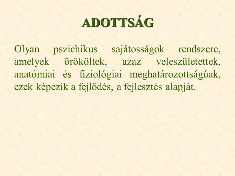 ADOTTSÁG