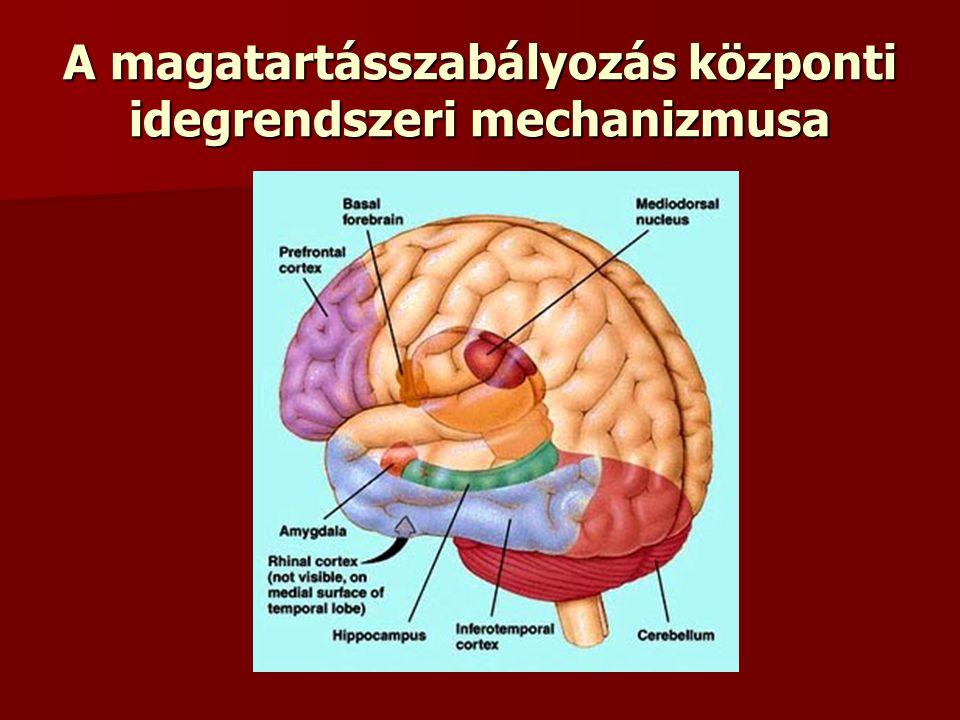 A magatartásszabályozás központi idegrendszeri mechanizmusa