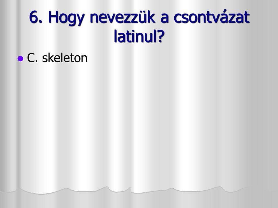 6. Hogy nevezzük a csontvázat latinul