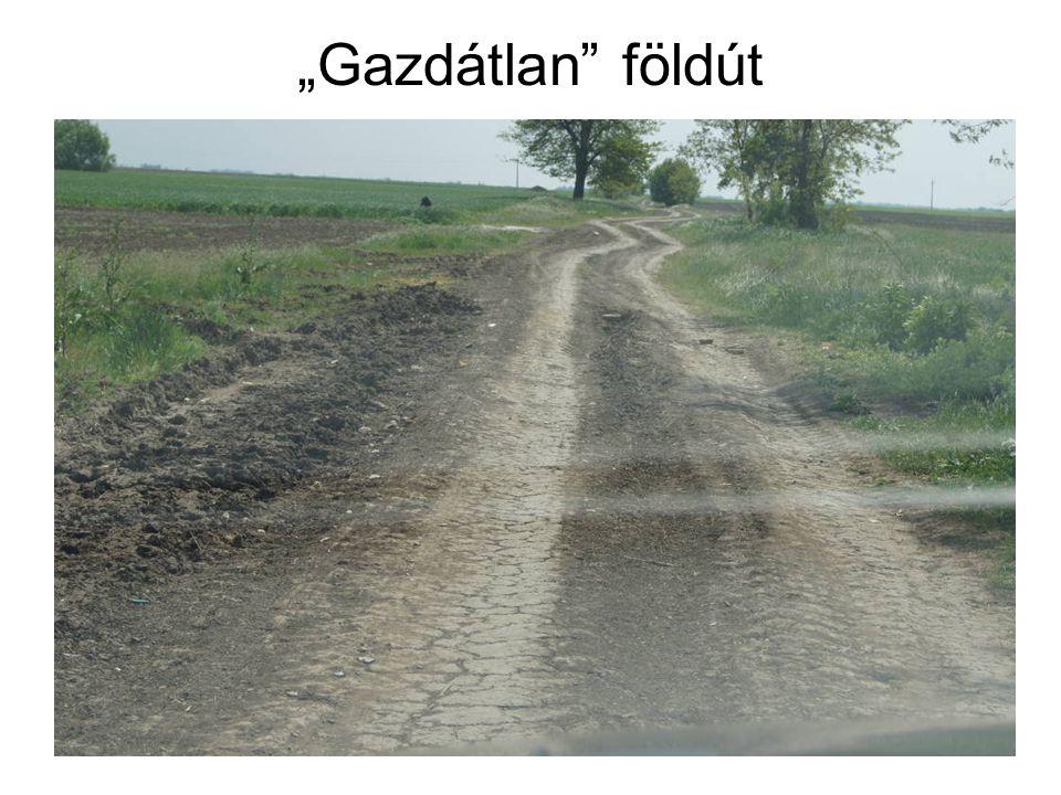 """Gazdátlan földút"