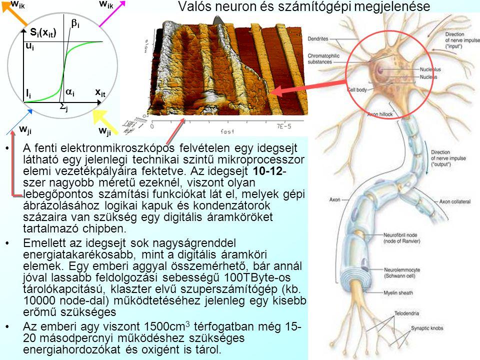 Valós neuron és számítógépi megjelenése