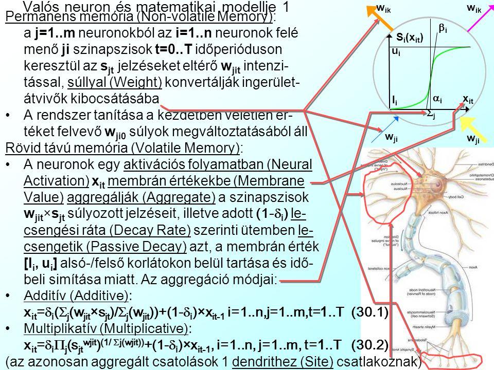 Valós neuron és matematikai modellje 1