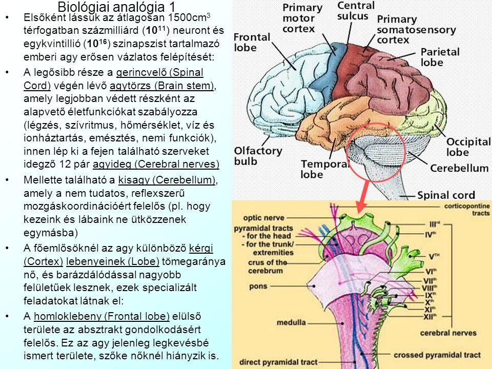 Biológiai analógia 1