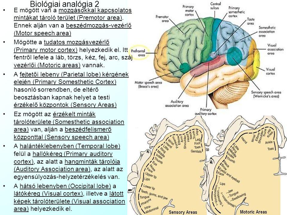 Biológiai analógia 2