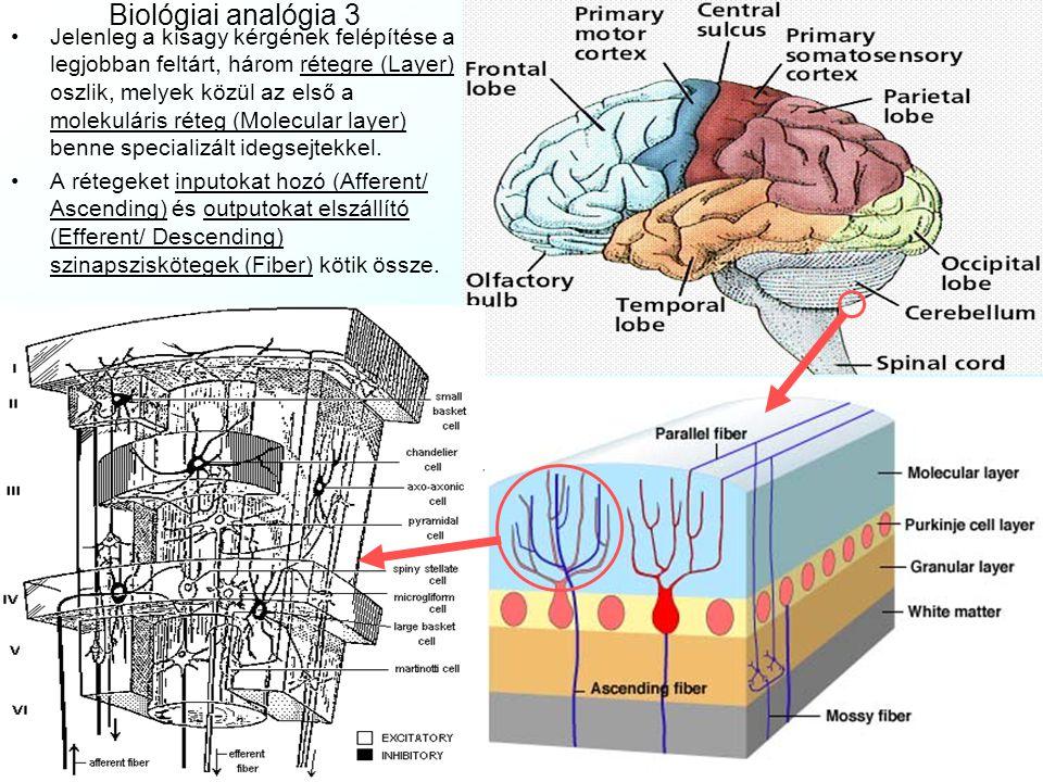 Biológiai analógia 3