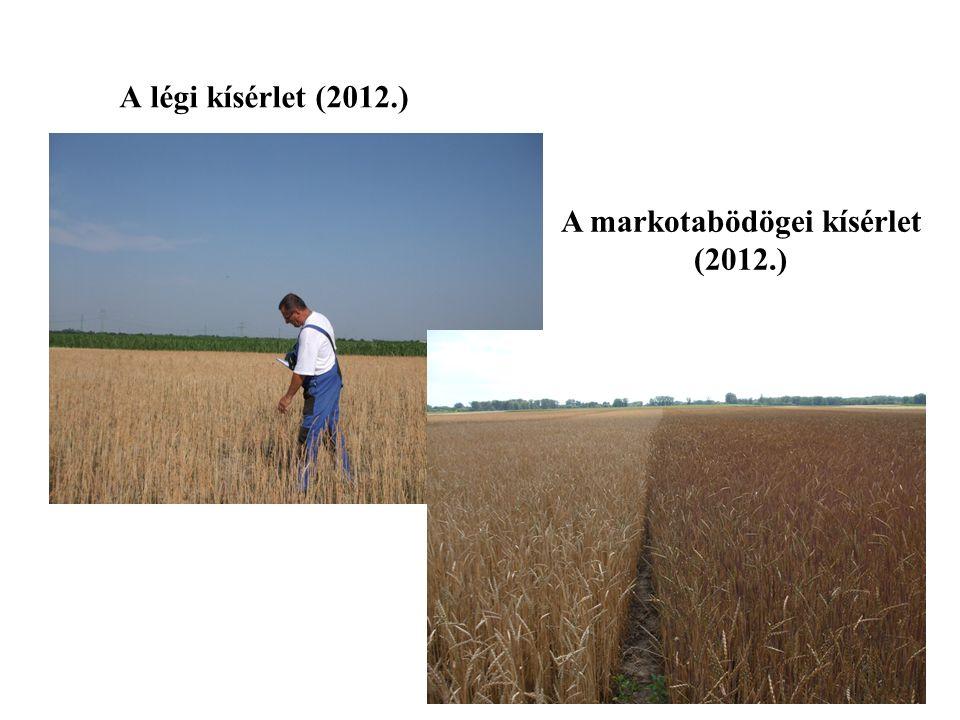 A markotabödögei kísérlet (2012.)
