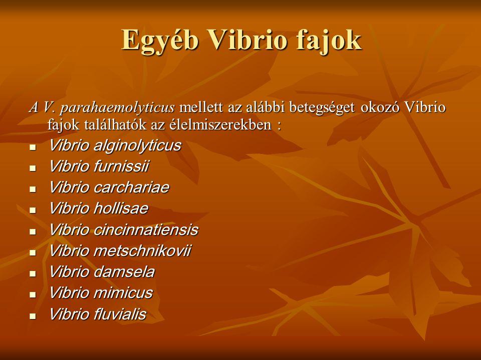 Egyéb Vibrio fajok A V. parahaemolyticus mellett az alábbi betegséget okozó Vibrio fajok találhatók az élelmiszerekben :