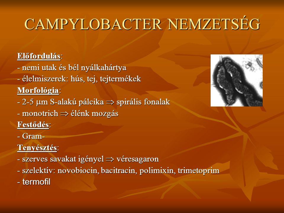 CAMPYLOBACTER NEMZETSÉG
