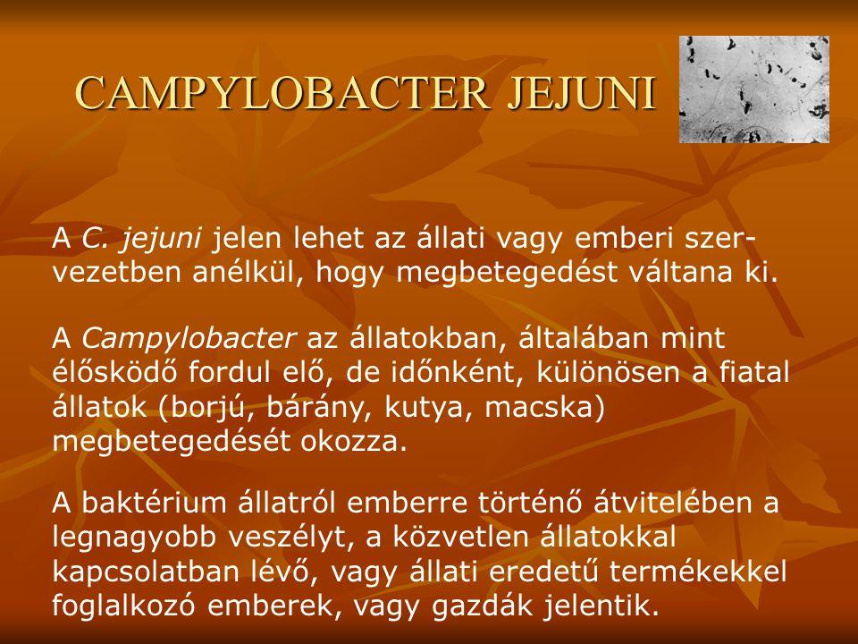 CAMPYLOBACTER JEJUNI A C. jejuni jelen lehet az állati vagy emberi szer-vezetben anélkül, hogy megbetegedést váltana ki.