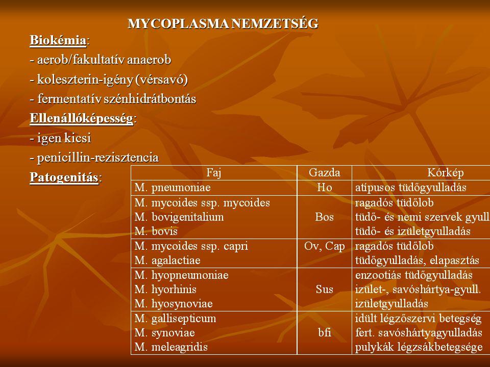 MYCOPLASMA NEMZETSÉG Biokémia: - aerob/fakultatív anaerob. - koleszterin-igény (vérsavó) - fermentatív szénhidrátbontás.