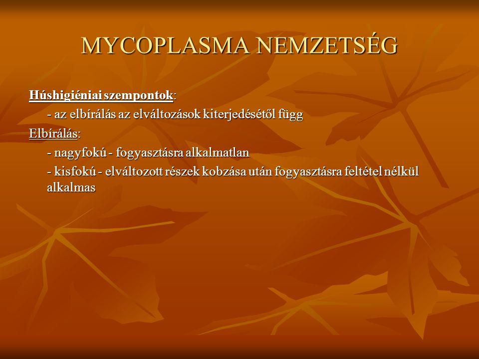 MYCOPLASMA NEMZETSÉG Húshigiéniai szempontok: