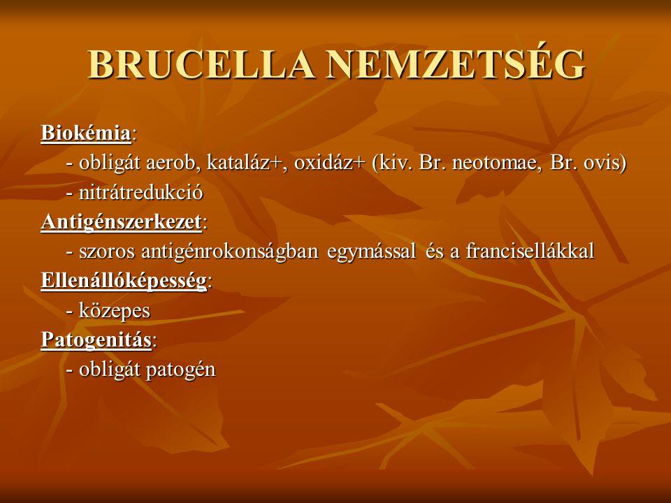 BRUCELLA NEMZETSÉG Biokémia: