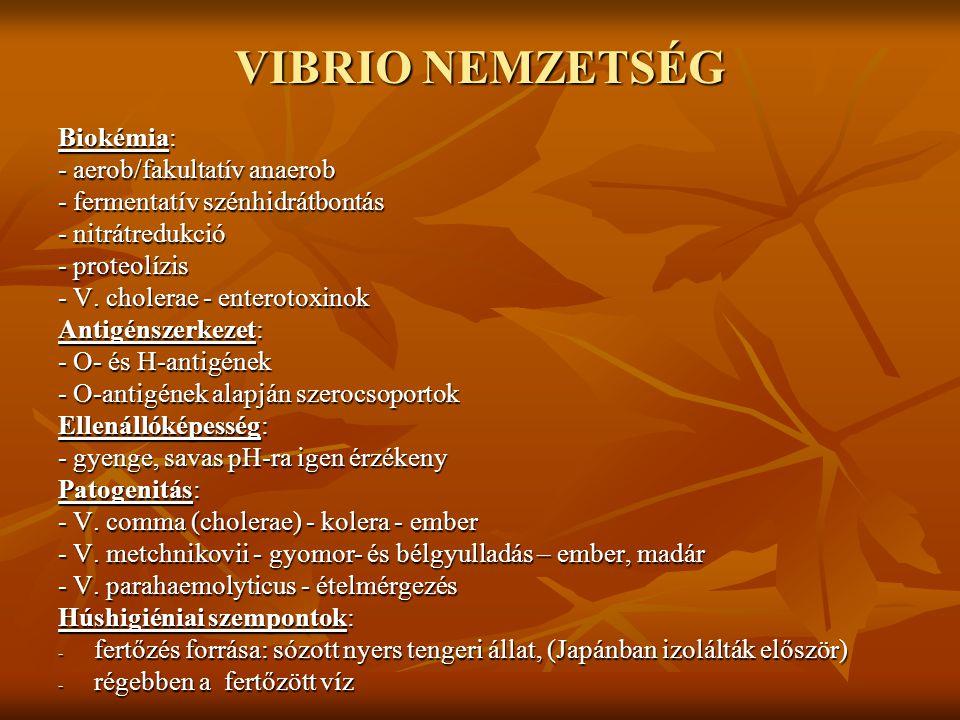 VIBRIO NEMZETSÉG Biokémia: - aerob/fakultatív anaerob