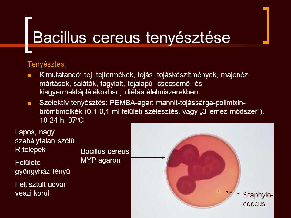 Bacillus cereus tenyésztése