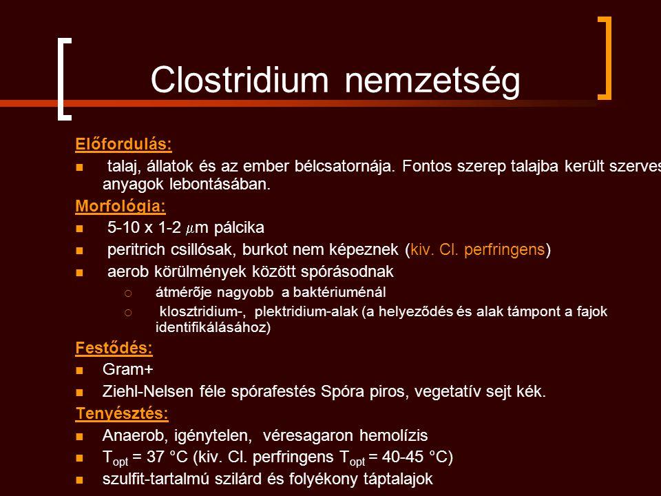 Clostridium nemzetség