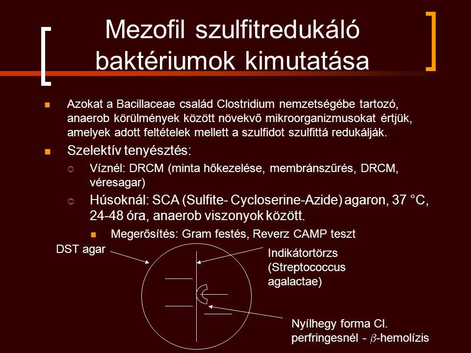Mezofil szulfitredukáló baktériumok kimutatása