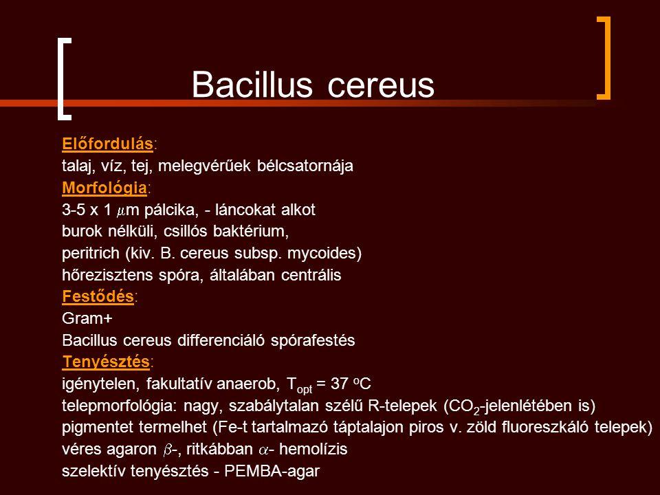 Bacillus cereus Előfordulás: