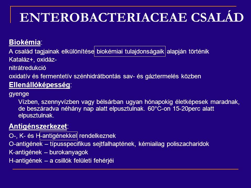 ENTEROBACTERIACEAE CSALÁD