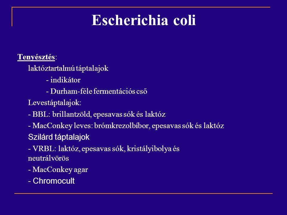 Escherichia coli Tenyésztés: laktóztartalmú táptalajok - indikátor