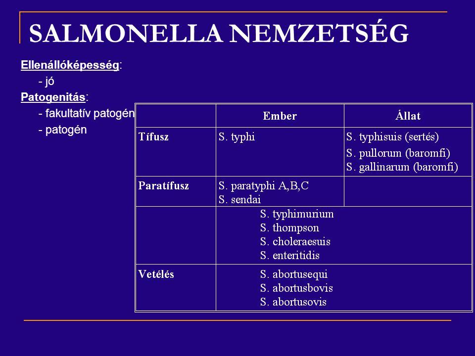 SALMONELLA NEMZETSÉG Ellenállóképesség: - jó Patogenitás: